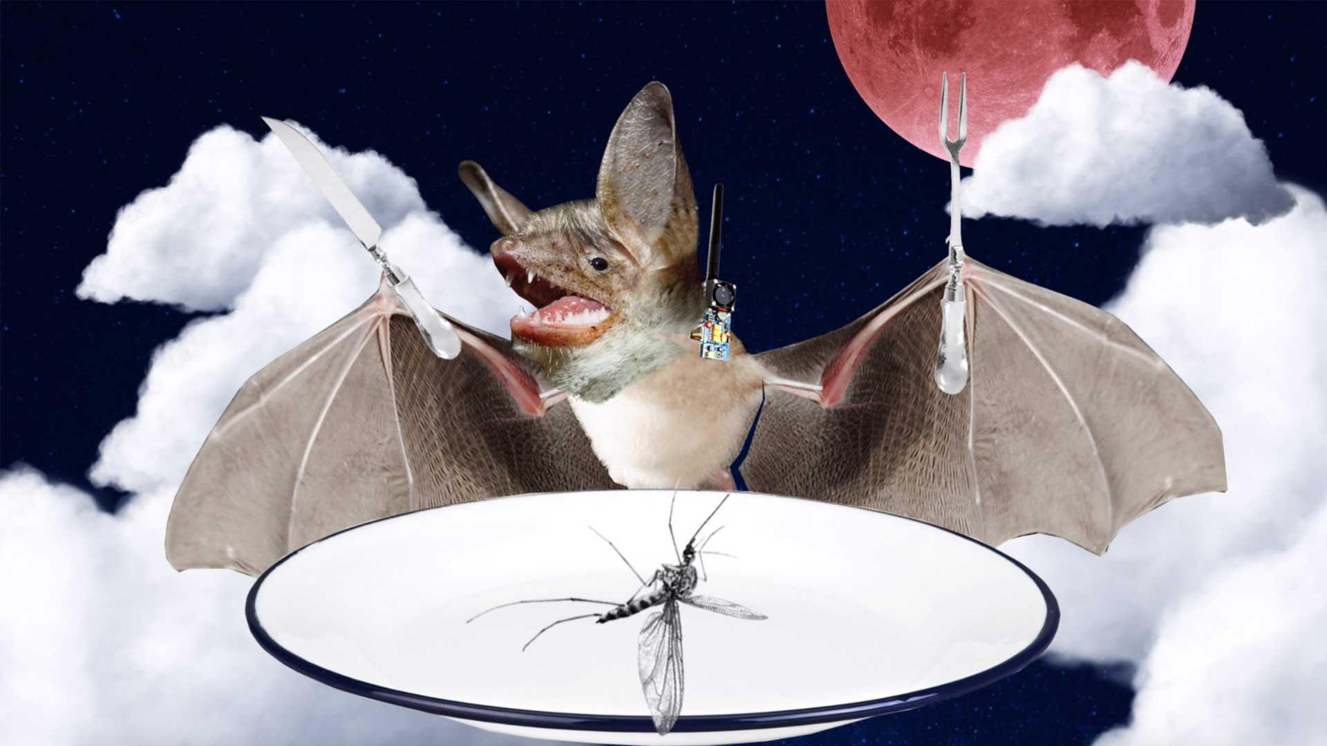 chauve-sourie moustique manger assiette nourrir lune espace nuage