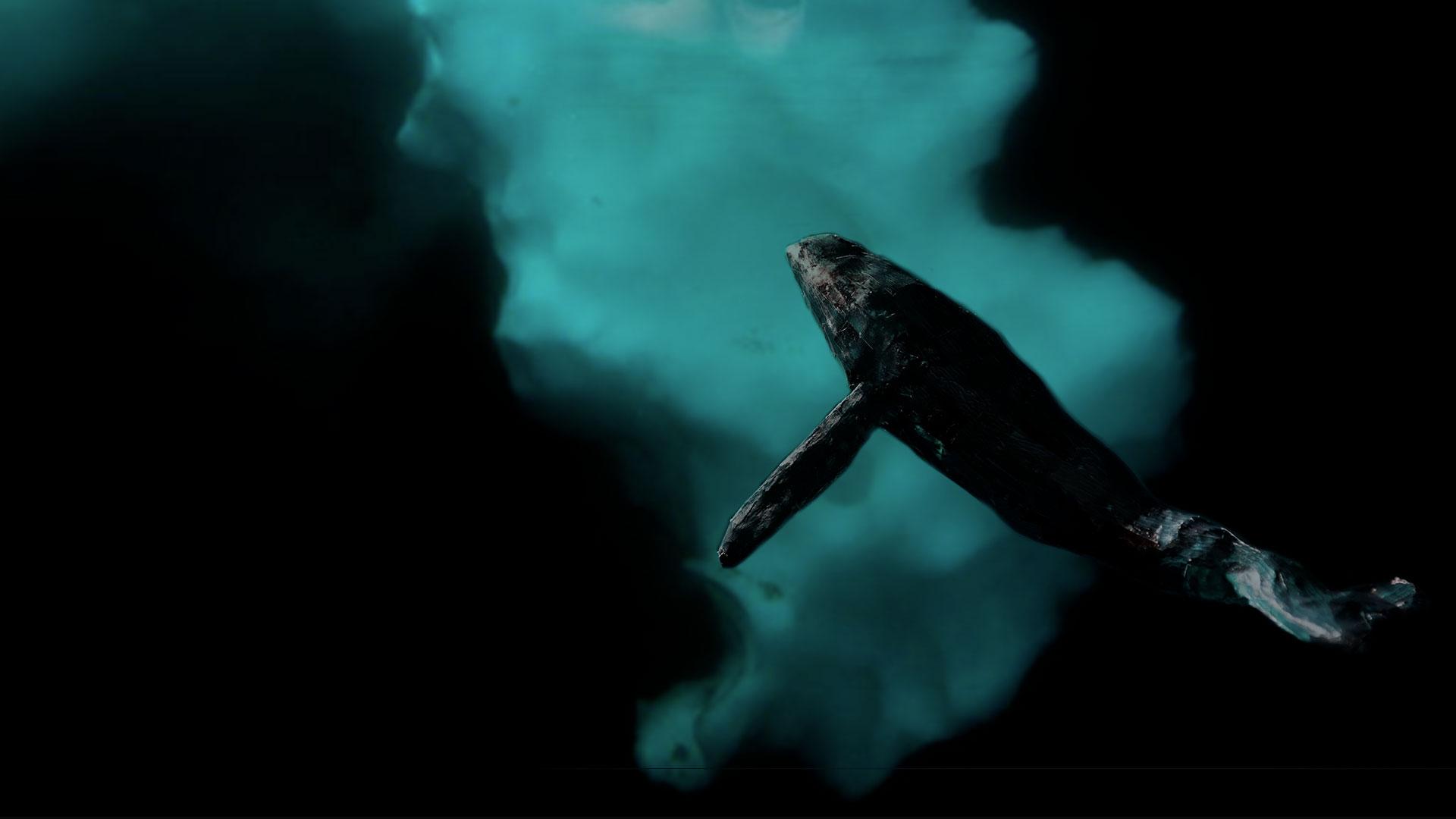 baleine ice-berg glace antarctique océan mer froid